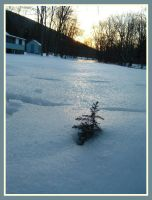 Little tree. by theceruleancreep