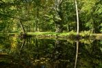 Enchanted Forest Lake - Summerly 02 by LuDa-Stock