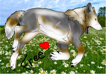 Free Wolf Adoptable! by Babicted