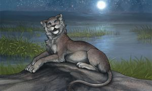 Lioden: Aphrodisia explore lioness by mrXylax