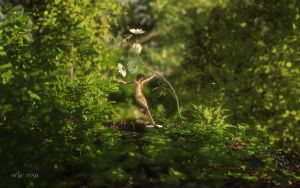 Nature's Dance (revisited) by ArthurBlue