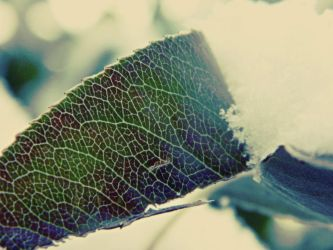 funky leaf pattern by bloody-magpies