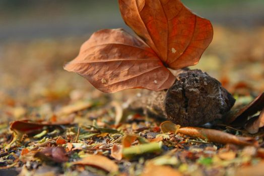 Dead wood and leaves by WellGG