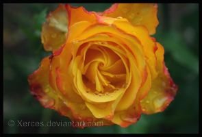 Tequila Sunrise by Xerces