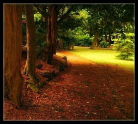 A Walk In The Park by Forestina-Fotos