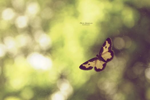 Fly butterfly by MariaG93