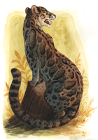 Clouded Leopard by Camelid
