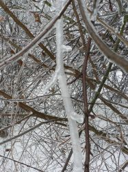 Frozen branch by marvil74