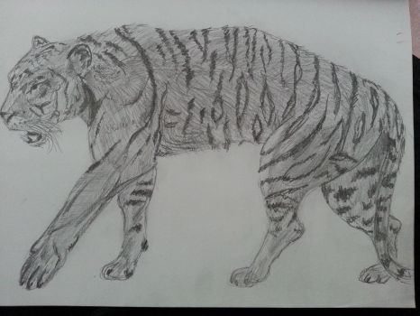 old tiger picture by slmur