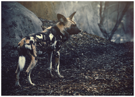 Day 26 - The Wild Dog by MonsterBrand