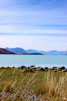 Tussock at Lake Tekapo by MrsSpock