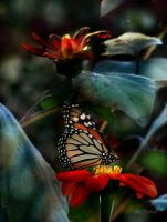 Butterfly and flowers  by gintautegitte69