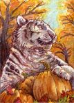 Khalamea ACEO by thornwolf