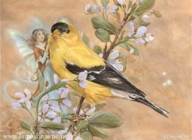 Goldfinch by yaamas