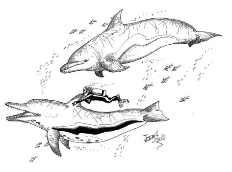 Swimming with (giant killer) dolphins by HodariNundu