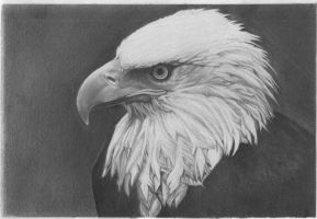 Eagle by sparrowsong83
