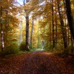 Autumn Paths by Legends-Stock