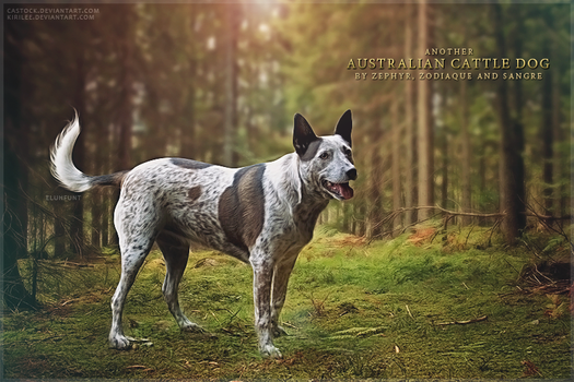 Australian Cattle Dogs by xxELUHFUNT