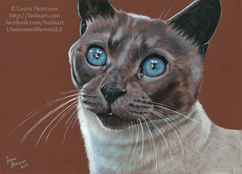 Cat with colored pencils by Hei-La