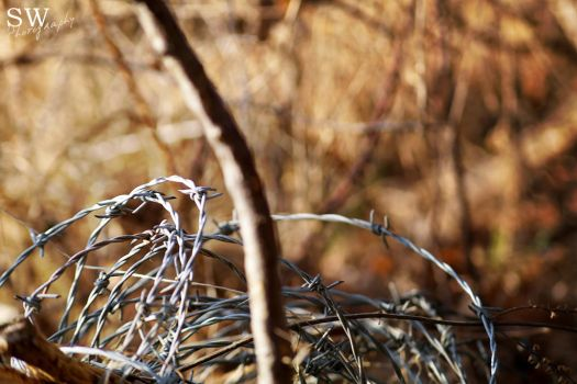 Barbed wire by xXSWPhotographyXx