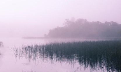 Mugdock in the Mist #4 by SaraWolfPhotographer