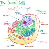Botched Bio: Animal Cell pt1, The Parts by supergal12000