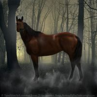 Paranormal by leathermoorehollow45