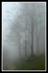 Fogg by DreamPhotoFactory