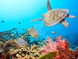 Butterflyfishes and turtle I by MotHaiBaPhoto