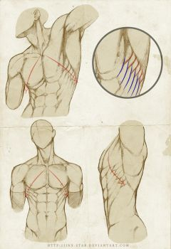 +SERRATUS ANTERIOR : REDUX+ by jinx-star