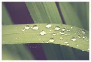 Water Drops by OMG-ImSoAwesome