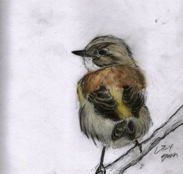 Yellow-rumped Warbler by Lupus-Lily
