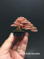 Exhibition grade wire bonsai tree by Ken To by KenToArt