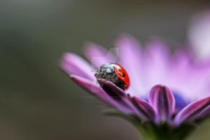 the bug... by clochartist-photo