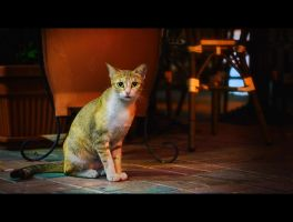 Urban Cats -38 by MARX77
