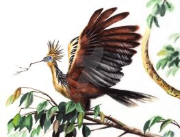 World of Birds 4 - Hoatzin by rieke-b