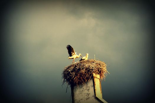 a storks nest by panter-mis