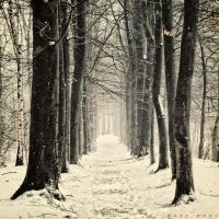 Winter Mantra by Oer-Wout