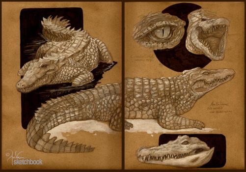 Crocodile Studies by churro818