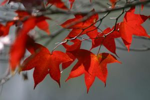 autum leaves by OHEYO