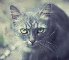 Green Eyes by Paulinaz