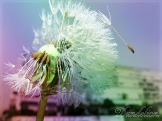 Colorful Dandelion by squalo