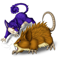 Rattata and evo