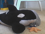 Giant Willy-Shamu and his tiny friends by Dolphingurl21stuff