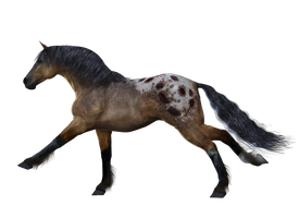 Horse 9 PNG by Variety-Stock