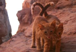 Cats of Petra by THEsimplePLEASURES
