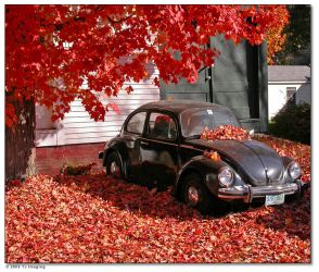 The Fall of the VW by tedhieron