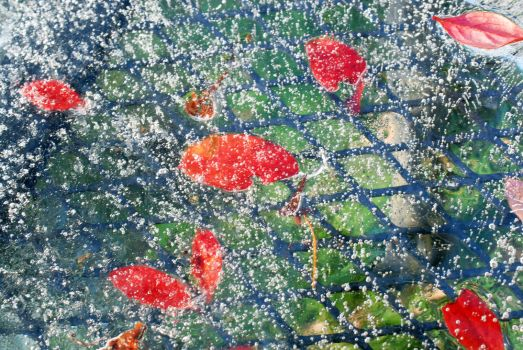 Bubbles Leaves and Ice by DanikaMilles