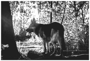 Black And White Fall by corniger-aries