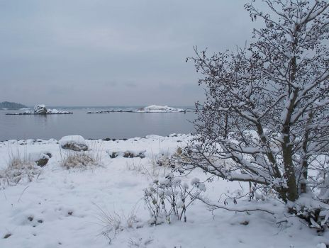 Winter at bay by eswendel